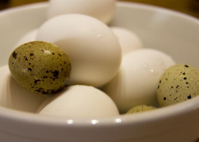Egg_0005